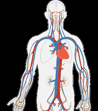 Vücudumuzdaki Hücrelerin Ne Kadarı Bize Ait?